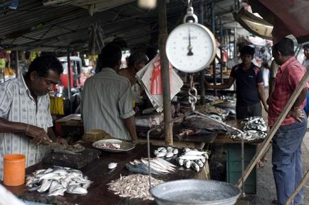 Galle, Sri Lanka - January 27th, 2011:seller at a fish market