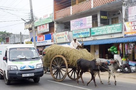 Batticaloa, Sri Lanka - February 15, 2011: Modern car and traditional bullock cart on the road in Batticaloa. This is normal situation for Sri Lankan traffic.