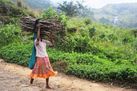 Neluwa; Sri Lanka - January 27; 2011: Girl carry firewood on top of her head as she make her way back to her home in small village in Sinharaja Rain Forest. Sinharaja Rain Forest is the last viable area of primary tropical rainforest in Sri Lanka. The Rai Stock Photo - 9768070