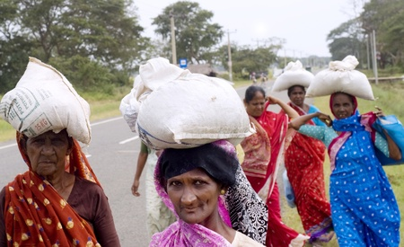 Arugam, Sri Lanka - Februara 15, 2011: Rural Sri Lankan women walking along the road carrying sacks on their heads. About 80 percent of Sri Lanka 's population lives in its rural areas. The rural poor account for 95 percent of the country's poor. Stock Photo - 10354689