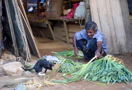 playing the market: Hikkaduwa, Sri Lanka - January 23, 2011: Lokal man plying with small cat at street market