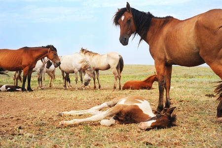Herd of horses have a rest in the field photo