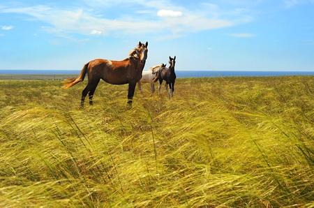 funny farm: Herd of horses in the prairie Stock Photo