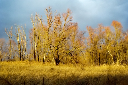 Autumn forest at sunset Stock Photo - 10580545