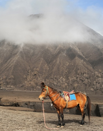 Horse stand in front of vulkano in Jawa, Indonesia photo