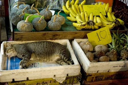 bangkok city: Cat sleeping at street market in Bangkoks Chinatown