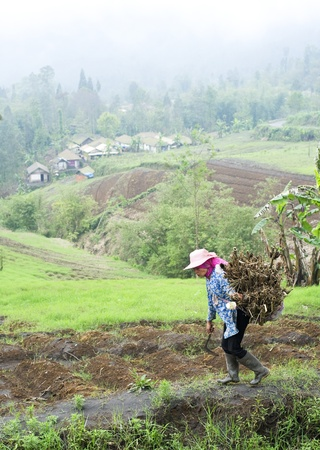 Sukapura, Indonesia - April 24, 2011: Indonesian woman carrying firewood on the way to her home Stock Photo - 12256423