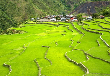 Rice terrace in Cordillera mountains, Philippines photo