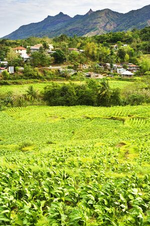 Philippines mountain village and tobacco field. Luzon Island photo