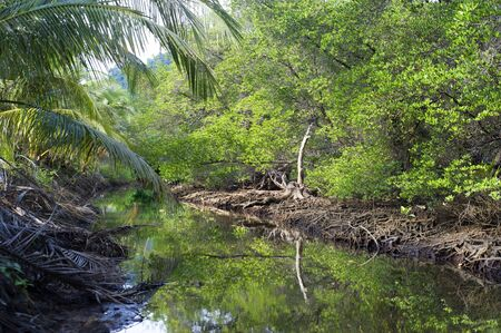 Mangrove forest on Koh Chang island, Thailand