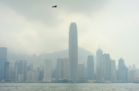 smog: Eagle flying above the Hong Kong skyscrapers