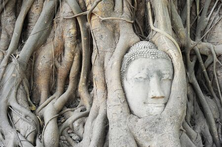 Head of sandstone Buddha in tree root at Wat Mahathat Temple, Ayutthaya, Thailand  photo