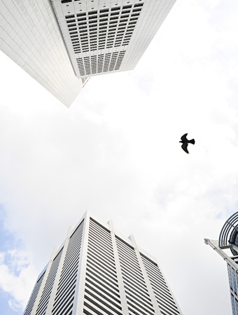 beetwen: Bird flying beetwen the high skyscrapers in Singapore Stock Photo