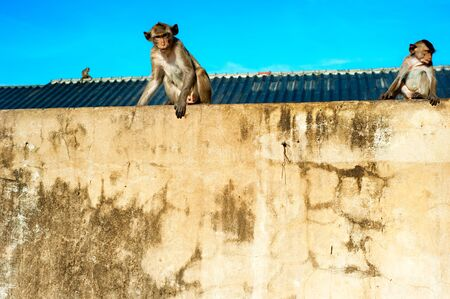 Monkyes sitting on the wall in Lopburi, Thailand photo