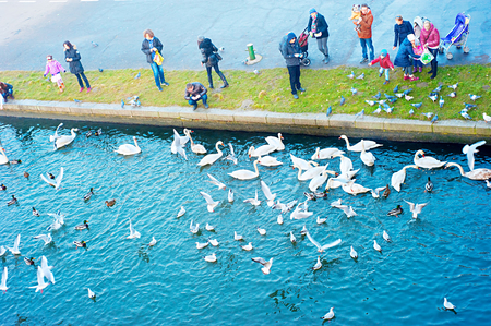 KRAKOW, POLAND - JANUARY 03, 2014: Unidentified people feeging birds at Vistula river in Krakow.
