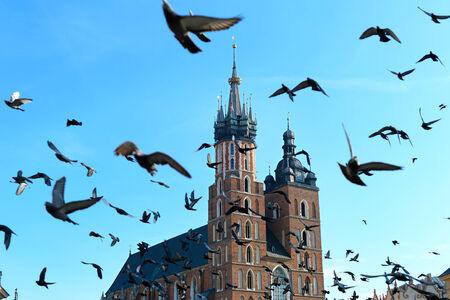 main market: Pigeon volare sopra Chiesa di Santa Maria in Piazza del Mercato a Cracovia, Polonia. Archivio Fotografico