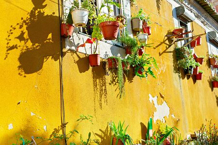 Old yellow wall with flower pots. Lisbon, Portugal