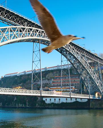 dom: Flying seagull et Pont Dom Luis I � Porto, au Portugal. Banque d'images