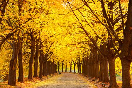 Linden alley in Kiev Botanical garden in the fall. Ukraine