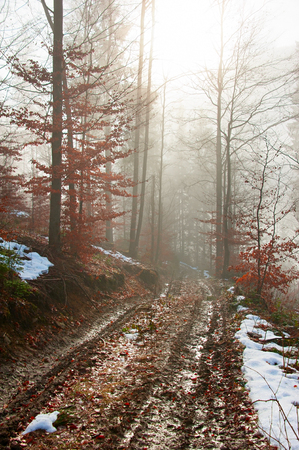 snow tree: Dirty foggy road in the forest at sunrise. Carpathians mountains