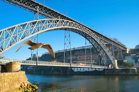 fling: Seagull fling naer the Dom Luis I Bridge over Douro river in Porto, Portugal.