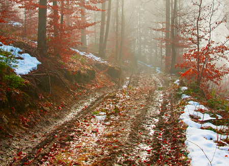mud and snow: Dirty foggy road in the forest at sunrise. Carpathians mountains