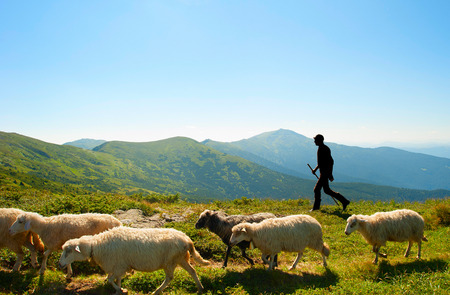 Silhouette of a shepherd with herd of sheeps on top of mountains