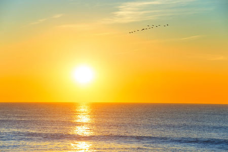 sunset sky: Flock of birds flying over the ocean in the sky at sunset
