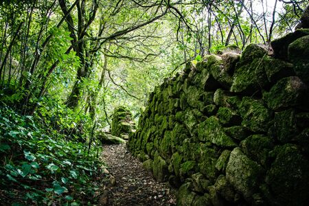 sintra: Enchanted Forest in Sintra, Portugal