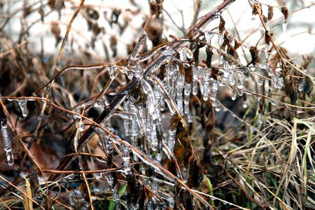froze: grass with icicles