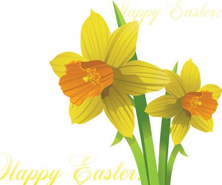 jonquil: vector narcissus. easter spring flowers Illustration