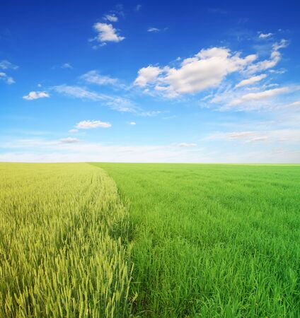 green field and blue cloudy sky photo