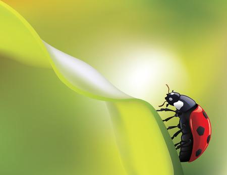 creeps: ladybird de vector de hoja verde