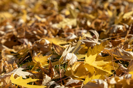 Fall tree leaves. Autumn copy space backdrop. Bokeh background.