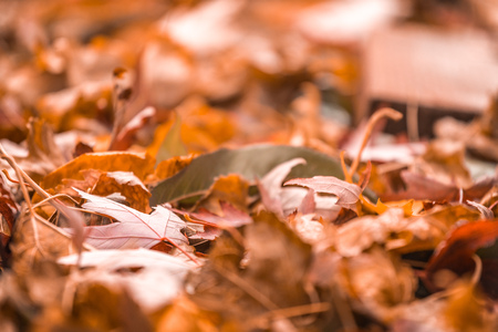 Closeup orange fall leaves in pile during Autumn. Selective focus with copy space. Imagens