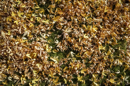 Wide angle fall leaves texture background. Imagens
