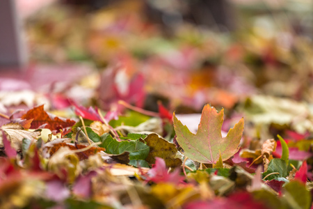 Colorful fall leaves in pile during Autumn. Selective focus with copy space.