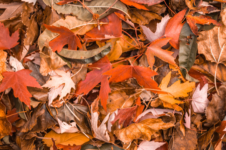 Orange and brown bright fall colored leaves during autumn. Imagens