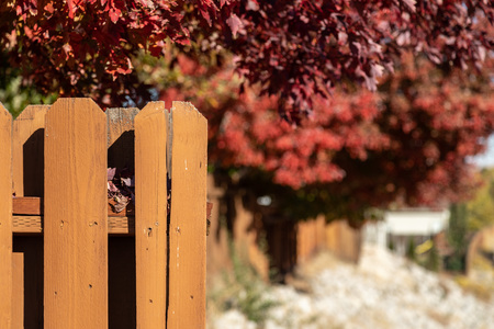 Brown wood fence fall background. Red trees in autumn backdrop. Imagens