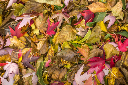 Colorful Red, Yellow And Orange Autumn Leaves Pattern On Ground.