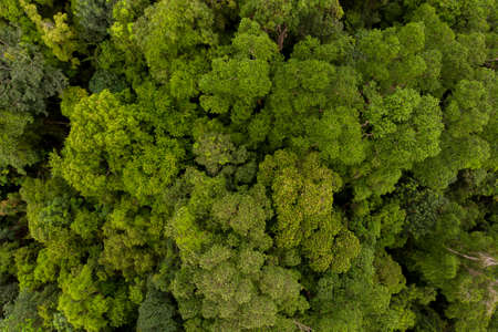 Aerial shot top down view rainforest trees, texture of green tree forest view from above. Stock Photo