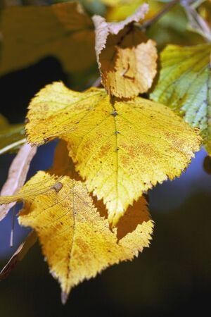 distinctness:  leaves