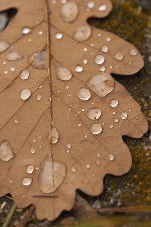 distinctness:  dew