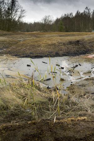 swamp: swamp Stock Photo