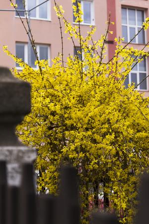flowering plants: flowering plants in spring nature Stock Photo