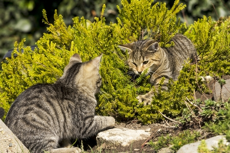 cats playing: Two small cats playing in nature Stock Photo