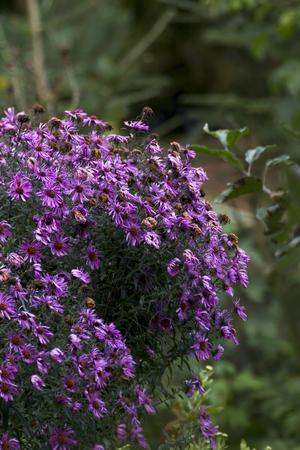 autumn garden: Colorful flowers in autumn garden