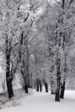 paisaje nevado con árboles en invierno Foto de archivo