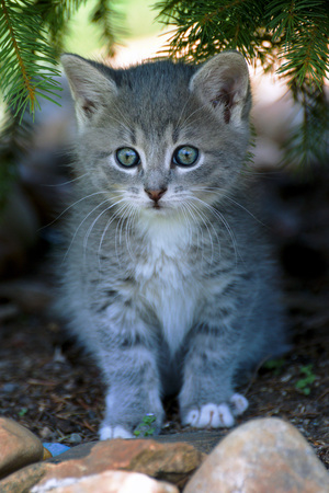 hunter playful: small cat on the prowl in nature