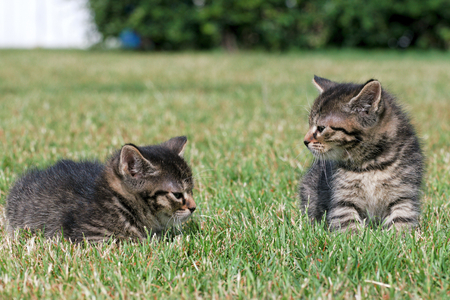 Little kittens play in the grass Stock Photo